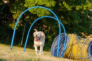Hoopers Einsteiger / Intensiv Workshop @ Hundeplatz Wetzlar