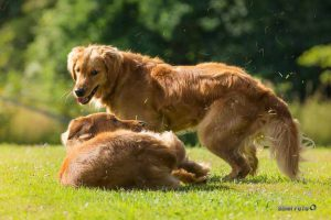 Hundetreff Spezial Dorlar @ Hundeplatz Dorlar