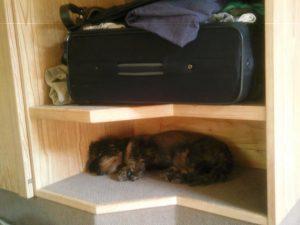 Stressfrei und entspannt leben mit Hund @ Seminarraum Lahnau